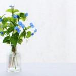 前回大好評だった藤沢まちゼミ「これで私も花瓶マスター!」受付開始!